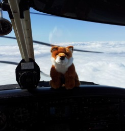 Fox Flight